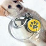 Bol-Dog. hu - Tappancsos kutyaékszer - sárga