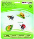 Safari Ltd Ciclul vietii- Buburuza (SAF662716)