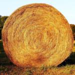 Agro-Largo Gigant Kaszáló Fűmag 25kg