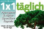 1x1 Pycnogenol és Alfa-liponsav kapszula