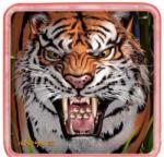 Cheatwell Games Ball Puzzles Magna Tigris