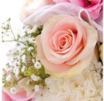 VR AMB. 13306250 Rose Romance papírszalvéta 33x33cm, 20db-os