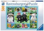 Ravensburger Édi kutyusok 500 db-os (14708)