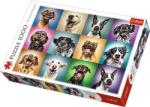 Trefl Funny Dogs - 1000 piese (10462) Puzzle