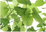 Komar Products Fototapet verde cu frunze revigorante (8-506)