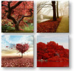 Tablouri pe panza Colorful world 4-piese XOBKOL26E42 (XOBKOL26E42)