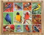 Springbok Puzzle Springbok de 1000 piese - Songbirds (33-10749) Puzzle